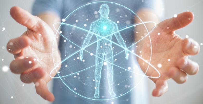 sistema endocanabinoide