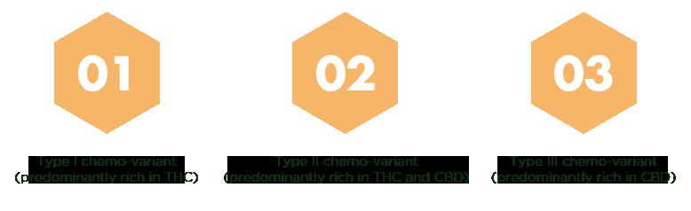 Tipos de Quimiovariante